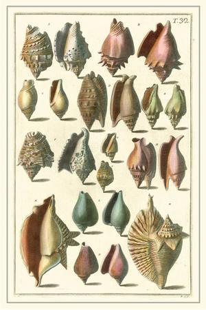 Seba Shell Collection III