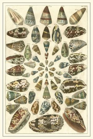 Seba Shell Collection V
