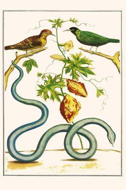 Serpents and Birds by Albertus Seba