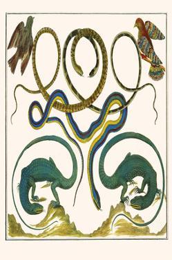 Serpents, Lizards and Birds by Albertus Seba
