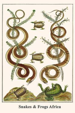 Snakes and Frogs Africa by Albertus Seba