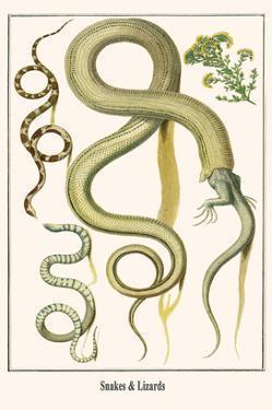 Snakes and Lizards by Albertus Seba