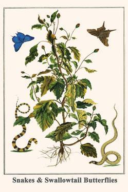 Snakes and Swallowtail Butterflies by Albertus Seba