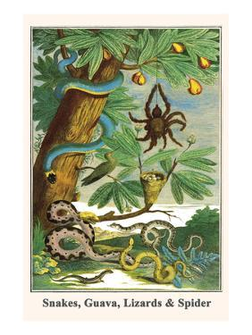Snakes, Guava, Lizards and Spider by Albertus Seba