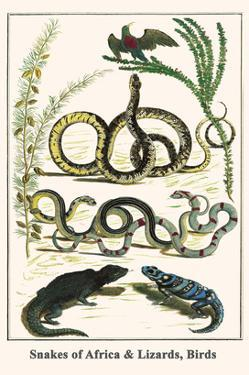 Snakes of Africa and Lizards, Birds by Albertus Seba
