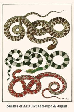 Snakes of Asia, Guadeloupe and Japan by Albertus Seba
