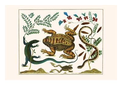Toad, Lizard, Serpentes, Leopard Frog, Capers