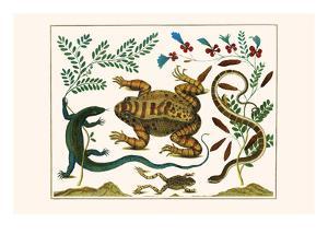 Toad, Lizard, Serpentes, Leopard Frog, Capers by Albertus Seba