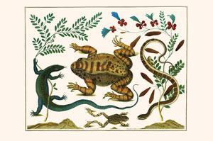 Toad, Lizard, Serpentes, Leopard Frog, Capers by Albertus Seba