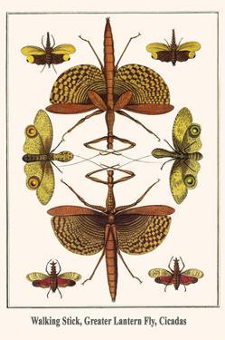Walking Stick, Greater Lantern Fly, Cicadas by Albertus Seba