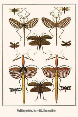 Walking Sticks, Katydid, Dragonflies by Albertus Seba
