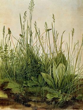 The Great Piece of Turf, 1503 by Albrecht Drer