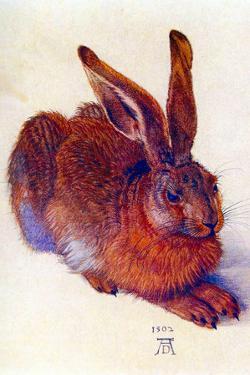 Albrecht Durer Field Hare by Albrecht Dürer