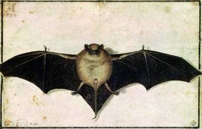 Bat, 1522 by Albrecht Dürer