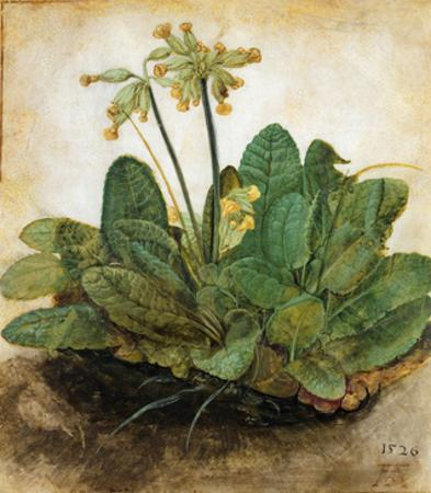 D?Rer: Tuft Of Cowslips by Albrecht Dürer
