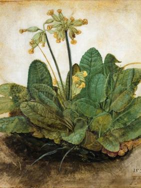 D?Rer: Tuft Of Cowslips by Albrecht Dürer