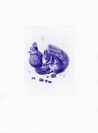 Eichhörnchen Blau/Weiß