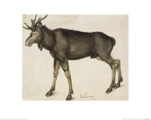 Elk by Albrecht Dürer