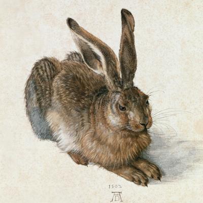 Hare-Hase. Watercolour. by Albrecht Dürer