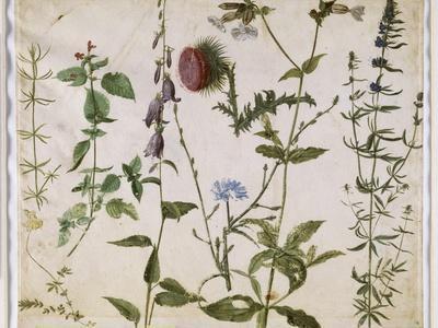 Huit études de fleurs des champs