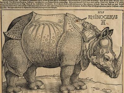 Rhinoceros, 1515 by Albrecht Dürer