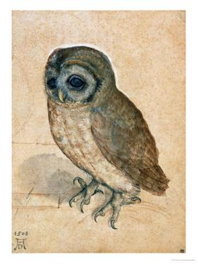 Sreech-Owl, 1508 by Albrecht Dürer