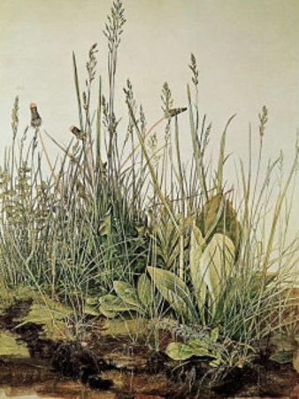 Tall Grass by Albrecht Dürer