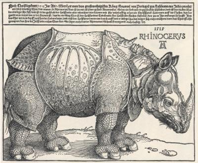 The Indian Rhinoceros is the Largest of the Asian Spiecies by Albrecht Dürer