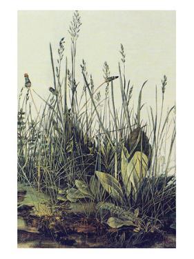 The Large Piece of Grass by Albrecht Dürer