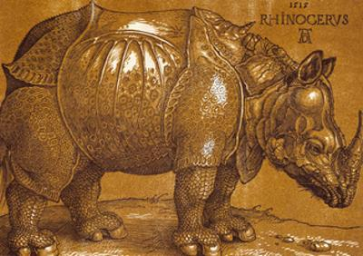 The Rhinoceros, 1515 Pen and ink, wash. by Albrecht Dürer