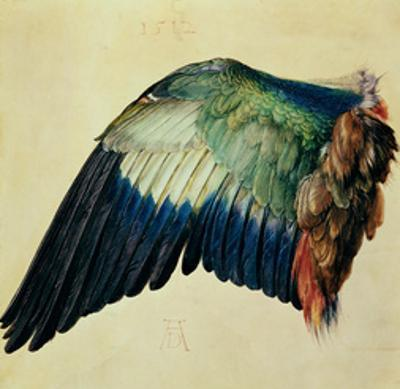 Wing of a Blue Roller, 1512 by Albrecht Dürer