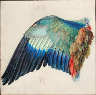 Wing of a Roller by Albrecht Dürer