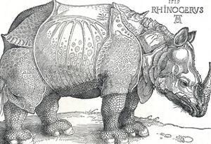 'A Rhinoceros', 1515, (1906) by Albrecht Durer