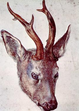 Albrecht Durer (Head of a deer)