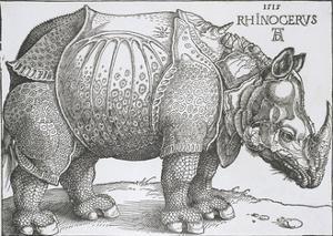 Rhinoceros, 1515 by Albrecht Durer