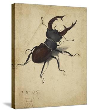 Stag Beetle, 1505 by Albrecht Durer