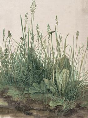 The Large Piece of Turf, 1503 by Albrecht Durer