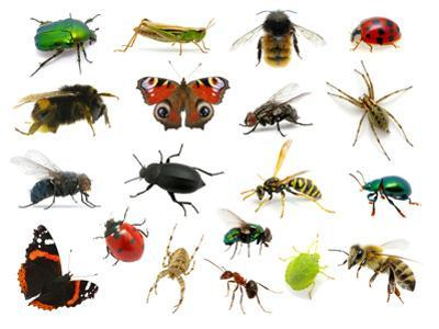 Set of Insects on White by Ale-ks