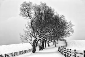 Along the Lane I by Aledanda