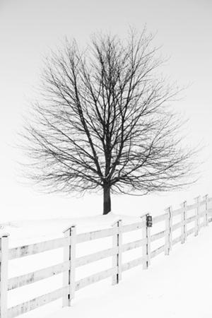 Along the Lane III by Aledanda