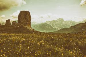 Floral Fields by Aledanda