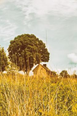 Grass and Sky by Aledanda