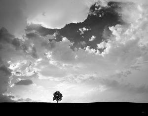 Lone Tree by Aledanda