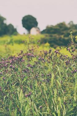 Roadside Flowers by Aledanda