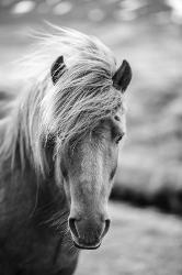 Affordable Horses Photography Posters For Sale At Allposterscom