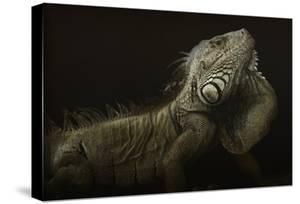 Iguana Profile by Aleksandar Milosavljevic