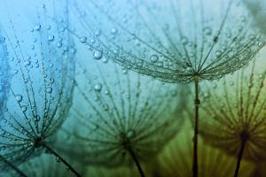 Seeds with Drops by Alekss