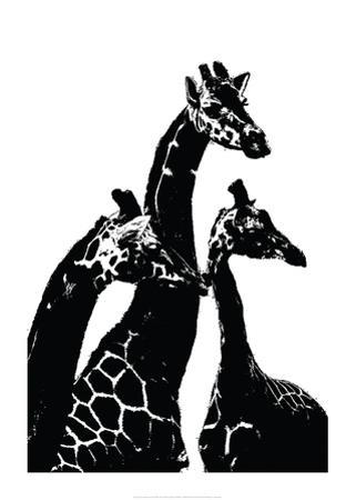 Giraffes by Alex Cherry