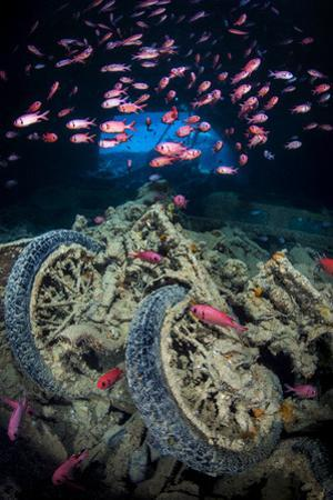Soldierfish Swimming Above British Motorbikes (Norton 16H) in Hms Thistlegorm Wreckage, Red Sea by Alex Mustard