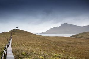 Cape Horn at the far southern end of South America, in the islands of Cape Horn National Park, Pata by Alex Robinson